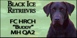 Black Ice retrievers Buddy