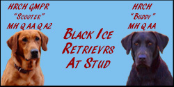 Black Ice Retrievers