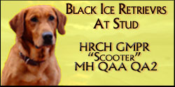 Black Ice Retrievers Scooter
