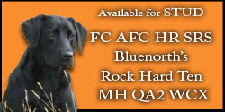 FC/AFC Bluenorths Rock hard ten MH